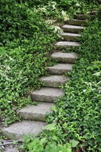 A staircase with old stone steps in a park, among thick green vegetation consisting of small plants, bushes and trees.